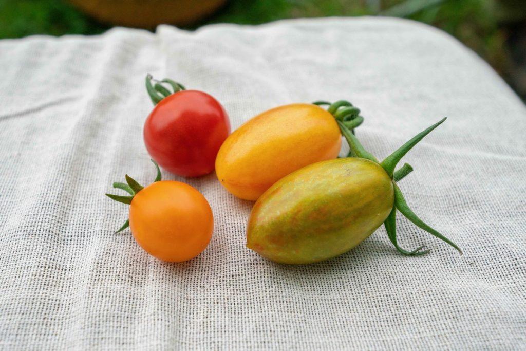 農薬有機肥料ミニトマトほれまる
